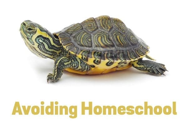 Homeschool Burnout - Seven ways to avoid it.
