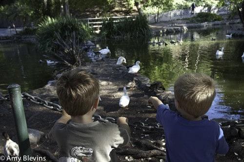 Feeding the Ducks for Free Summer Fun