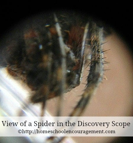 The Discovery Scope is a great tool to explore the world around us.  Nature, science and more will come alive through the lens of the Discovery Scope. #homeschool