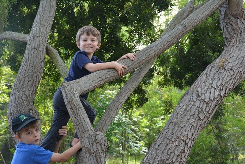 Hiking with Kids and Climbing Trees