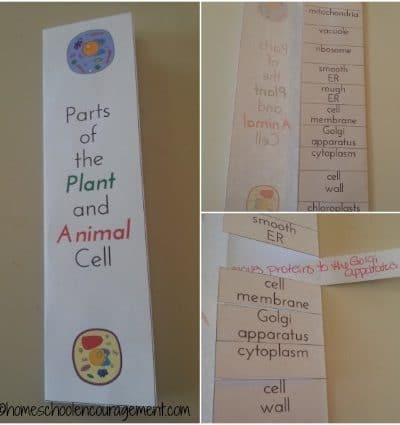 Lift the Flap Vocabulary Book | encouragingmomsathome.com