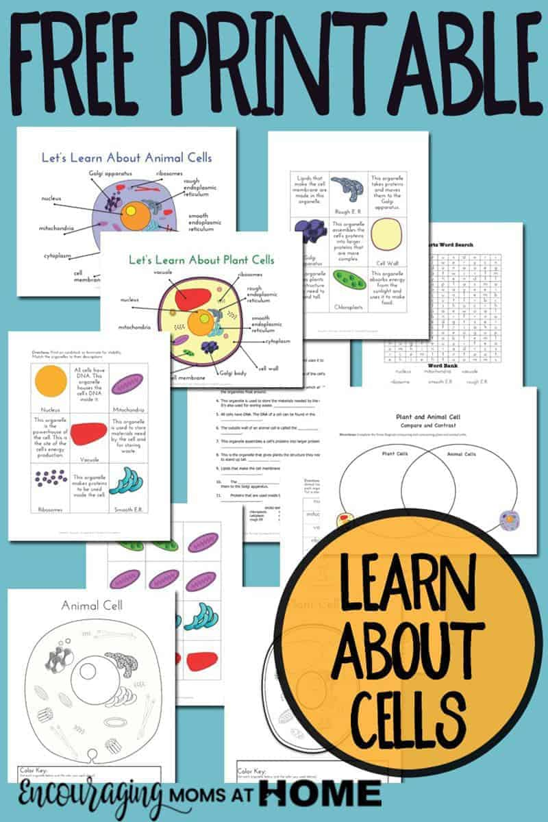 Plant and Animal Cell Printables Grades 4-6