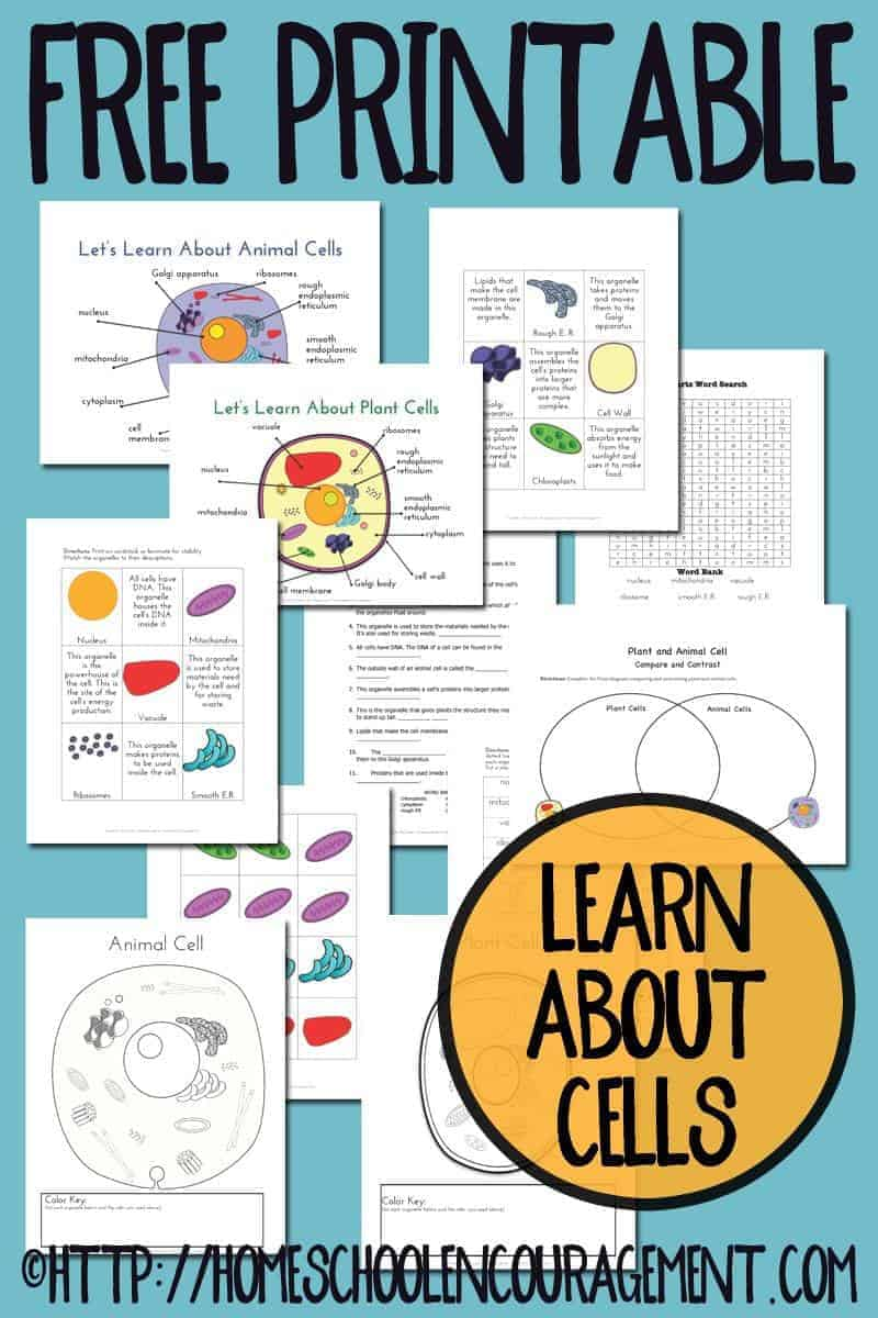 With Esl Worksheet Be Going To Together With Venn Diagram Worksheet ...