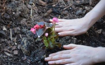 Gardening With Kids - Ideas