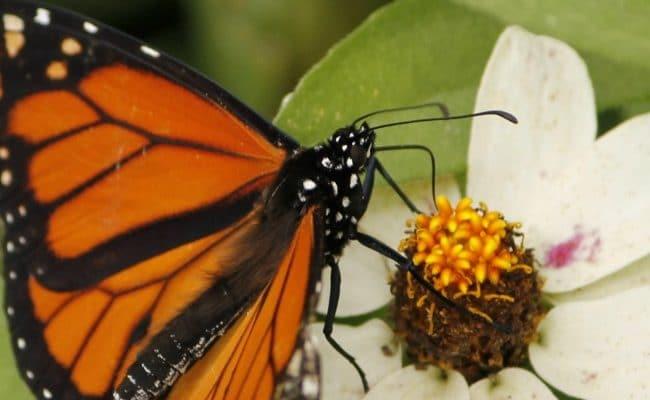 8 Awesome Summer Nature Study Ideas for Kids | encouragingmomsathome.com