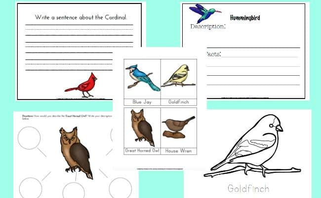 Backyard Birds Notebooking Pages