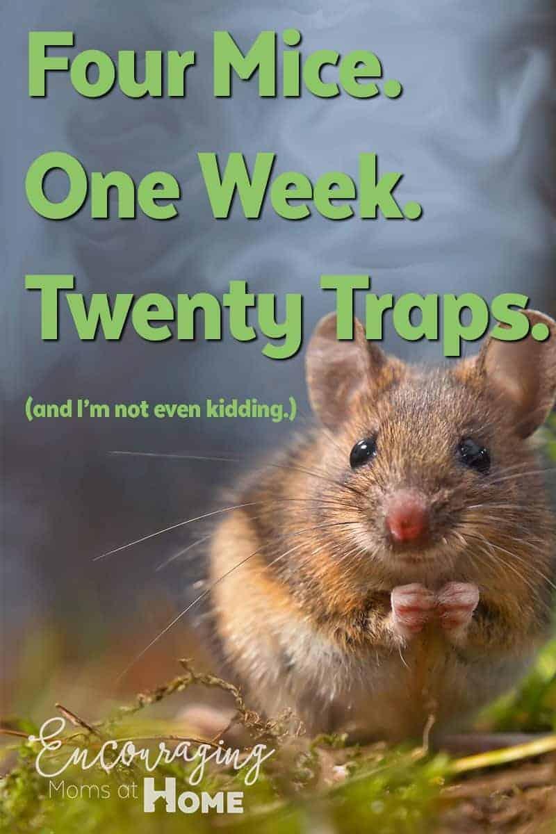 Four Mice. One Week