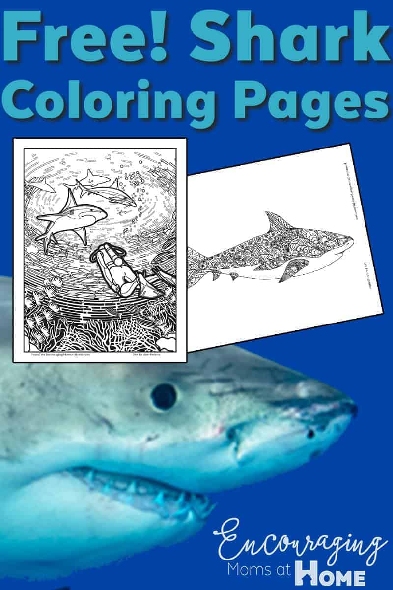 Free Shark Coloring Pages for Shark Week and More