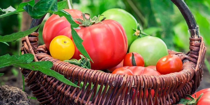 Preserving the Harvest: Five Methods of Food Preservation
