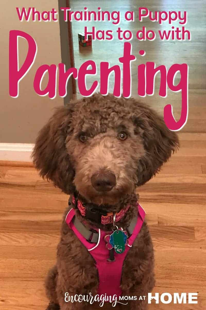 Parenting is hard. Especially when you realize you are in situation where you wish your children had gotten a little more training before that very moment? Just like training a puppy, it is a place where improvement is needed but can be a good place to be. Take a look at this article and find out how growth can happen and can change your family for the better.