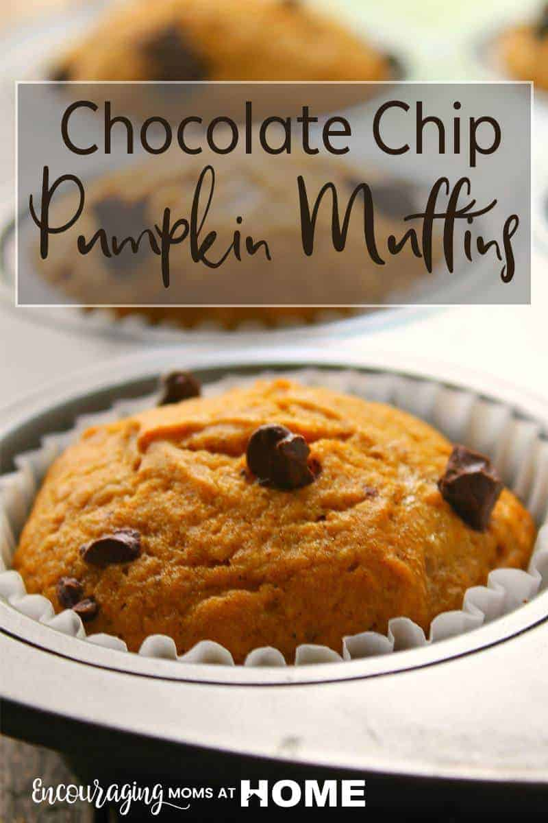 Do you love pumpkin treats with a touch of chocolate? These Chocolate Chip Pumpkin Muffins are incredibly moist and packed with a ton of pumpkin flavor, spice, and rich chocolate chips. They are a no-fail recipe that is sure to be a fall favorite!